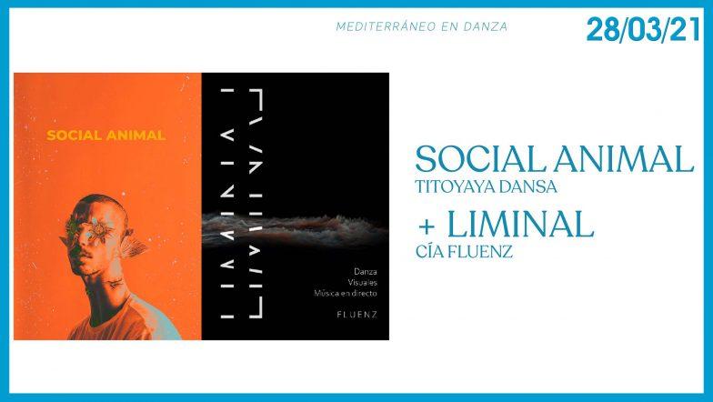 Liminal y Social Animal Mediterraneo en Danza